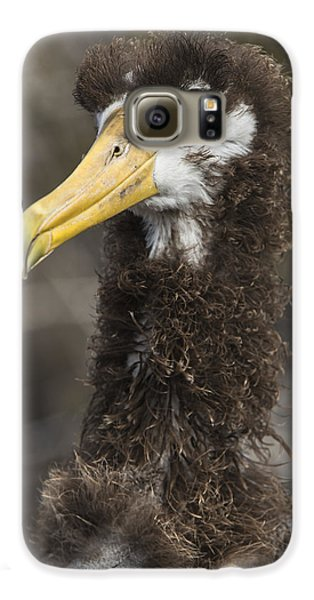 Waved Albatross Molting Juvenile Galaxy S6 Case by Pete Oxford