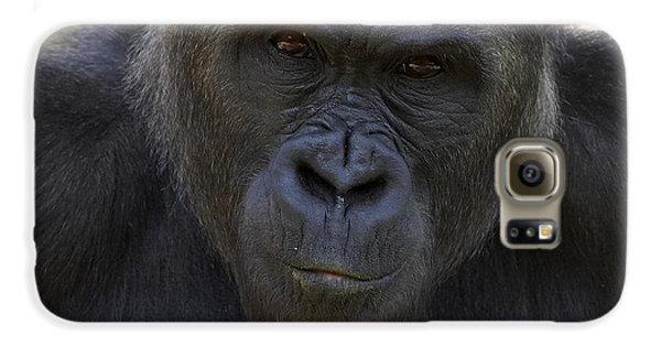 Western Lowland Gorilla Portrait Galaxy S6 Case by San Diego Zoo
