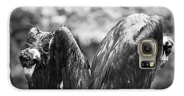 White-backed Vultures In The Rain Galaxy S6 Case by Pan Xunbin
