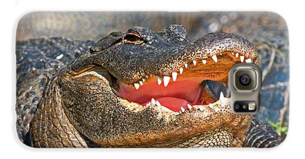 American Alligator Galaxy S6 Case by Millard H. Sharp