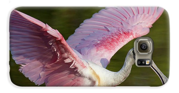 Usa, Florida, Everglades National Park Galaxy S6 Case by Jaynes Gallery
