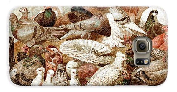 1870 Domestic Fancy Pigeon Breeds Darwin Galaxy S6 Case by Paul D Stewart