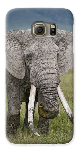 African Elephant Loxodonta Africana Galaxy S6 Case by Panoramic Images