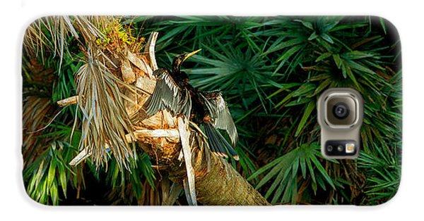 Anhinga Anhinga Anhinga On A Tree Galaxy S6 Case by Panoramic Images
