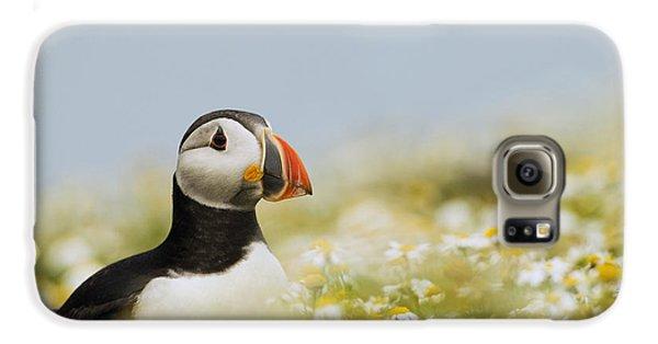 Atlantic Puffin In Breeding Plumage Galaxy S6 Case by Sebastian Kennerknecht