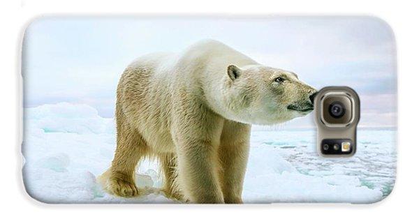Close Up Of A Standing Polar Bear Galaxy S6 Case by Peter J. Raymond