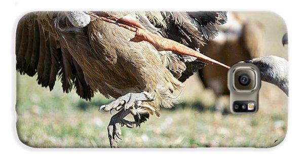 Griffon Vultures Feeding Galaxy S6 Case by Nicolas Reusens