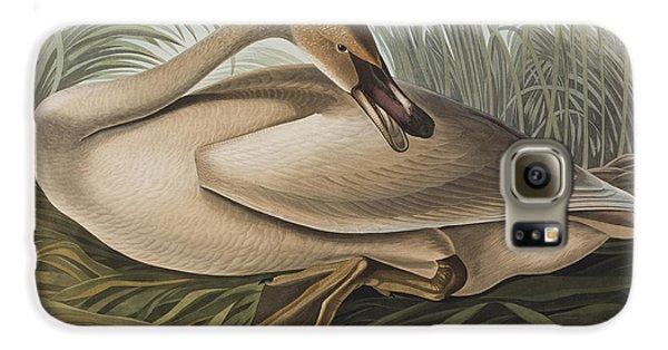 Trumpeter Swan Galaxy S6 Case by John James Audubon