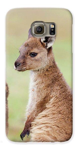 Western Grey Kangaroo (macropus Galaxy S6 Case by Martin Zwick