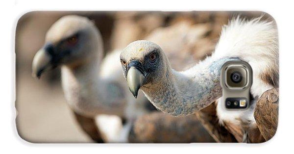 Griffon Vultures Galaxy S6 Case by Nicolas Reusens