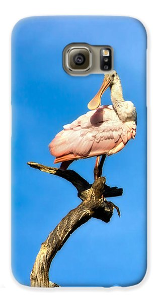Roseate Spoonbill Galaxy S6 Case by Mark Andrew Thomas