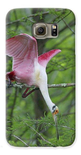Usa, Louisiana, Lake Martin Galaxy S6 Case by Jaynes Gallery