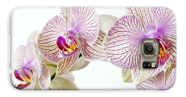 Phalaenopsis Orchid Phalaenopsis Sp Galaxy S6 Case by Lawrence Lawry