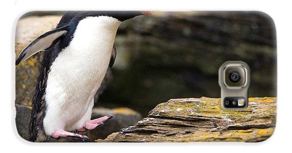 Rockhopper Penguin Galaxy S6 Case by John Shaw