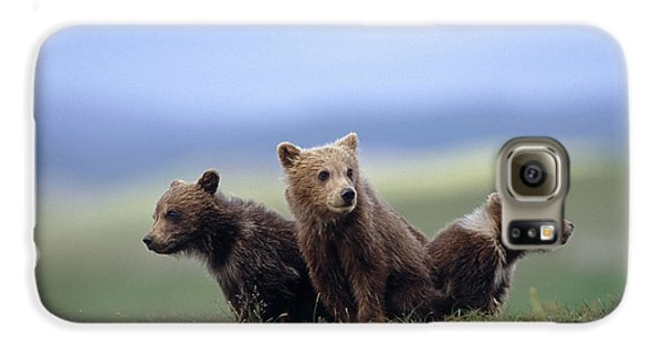 4 Young Brown Bear Cubs Huddled Galaxy S6 Case by Eberhard Brunner