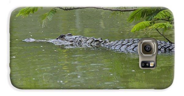 American Alligator Galaxy S6 Case by Mark Newman