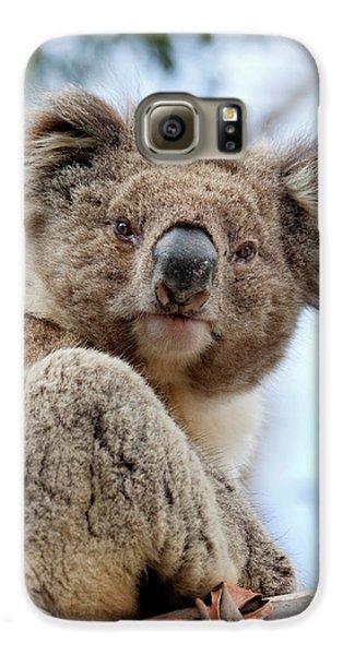 Koala (phascolarctos Cinereus Galaxy S6 Case by Martin Zwick
