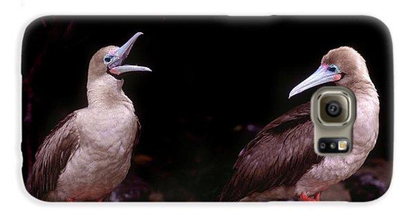 South America, Ecuador, Galapagos Galaxy S6 Case by Jaynes Gallery