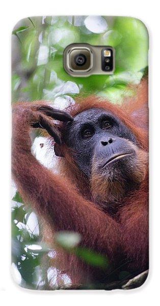 Sumatran Orangutan Galaxy S6 Case by Scubazoo