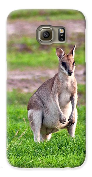 A Male Grey Kangaroos (macropus Galaxy S6 Case by Miva Stock