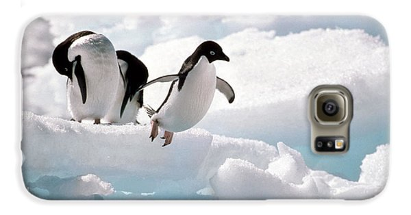 Adelie Penguins Galaxy S6 Case by Art Wolfe