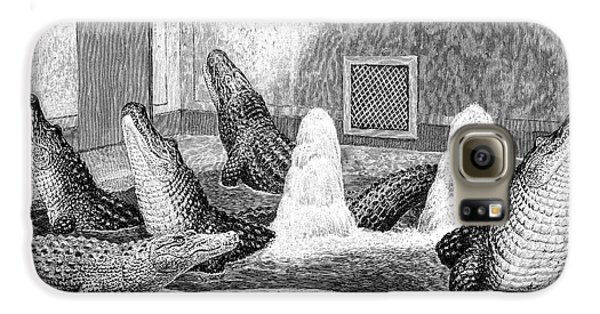 Alligators In Captivity Galaxy S6 Case by Science Photo Library
