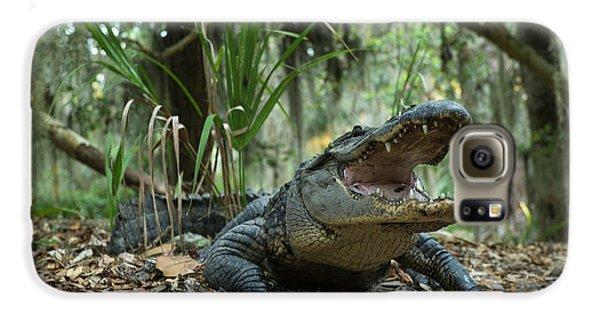 American Alligator (alligator Galaxy S6 Case by Pete Oxford