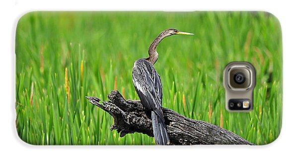 American Anhinga Galaxy S6 Case by Al Powell Photography USA