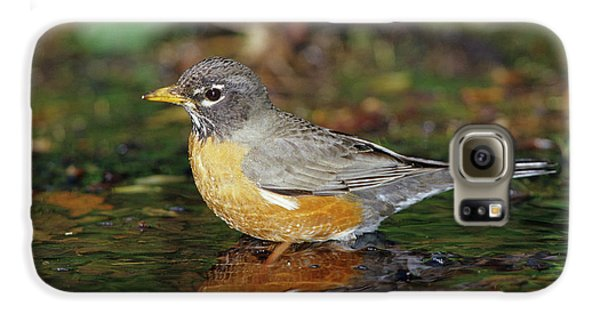 American Robin (turdis Migratorius Galaxy S6 Case by Richard and Susan Day