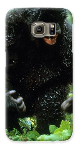 Angry Mountain Gorilla Galaxy S6 Case by Art Wolfe