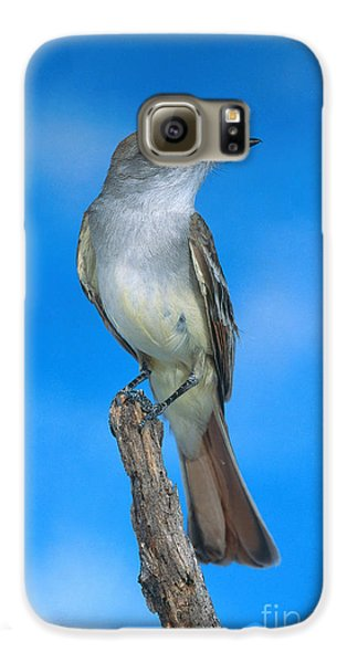 Ash-throated Flycatcher Galaxy S6 Case by Anthony Mercieca