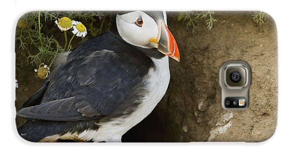 Atlantic Puffin At Burrow Skomer Island Galaxy S6 Case by Sebastian Kennerknecht