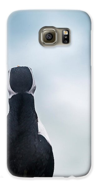 Atlantic Puffin Fratercula Arctica Galaxy S6 Case by Panoramic Images