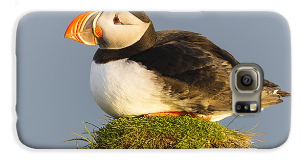 Atlantic Puffin Iceland Galaxy S6 Case by Peer von Wahl