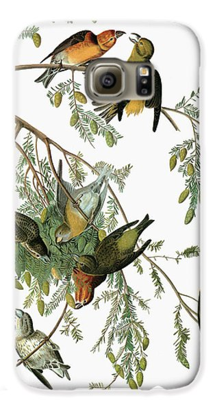 Audubon Crossbill Galaxy S6 Case by Granger