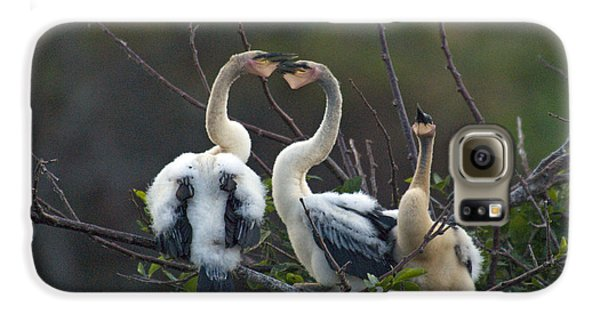 Baby Anhinga Galaxy S6 Case by Mark Newman