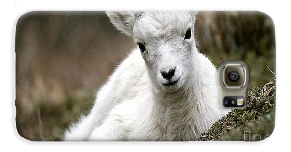 Baby Goat Galaxy S6 Case by Marvin Blaine