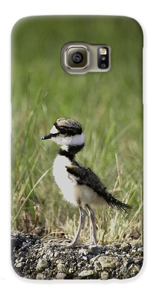 Baby Killdeer 2 Galaxy S6 Case by Thomas Young