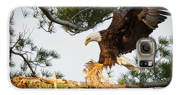 Bald Eagle Building Nest Galaxy S6 Case by Everet Regal