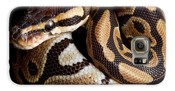 Ball Python Python Regius Galaxy S6 Case by David Kenny