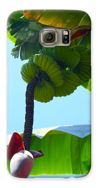 Banana Stalk Galaxy S6 Case by Carey Chen