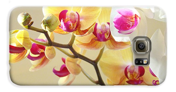 Beautiful Orchids Floral Art Prints Orchid Flowers Galaxy S6 Case by Baslee Troutman