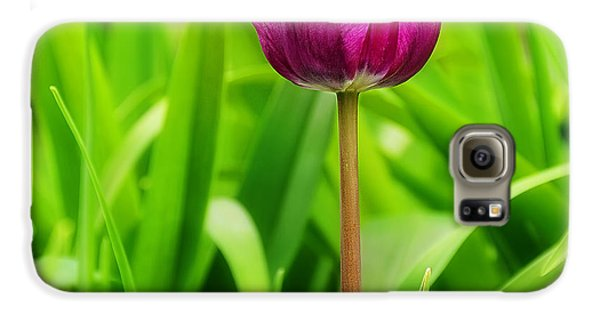 Beauty At A Glance- Purple Gems- Purple Tulips Rhode Island Tulips Purple Flower Galaxy S6 Case by Lourry Legarde