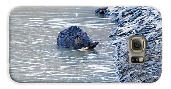 Beaver Chews On Stick Galaxy S6 Case by Chris Flees