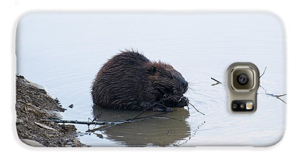 Beaver In The Shallows Galaxy S6 Case by Chris Flees