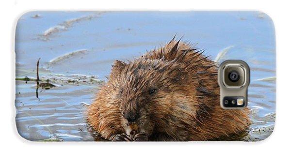 Beaver Portrait Galaxy S6 Case by Dan Sproul