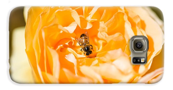 Bee Pollinating A Yellow Rose, Beverly Galaxy S6 Case by Panoramic Images