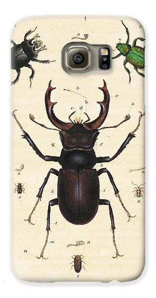 Beetles Galaxy S6 Case by King's College London