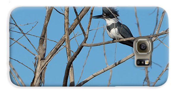 Belted Kingfisher 4 Galaxy S6 Case by Ernie Echols