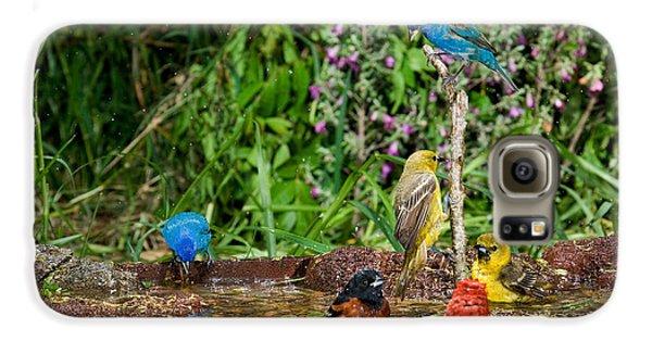 Birds Bathing Galaxy S6 Case by Anthony Mercieca